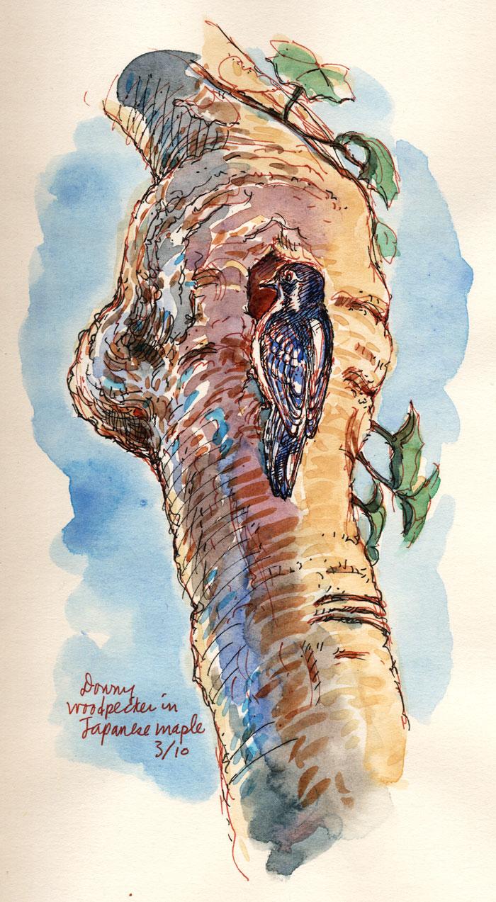 WoodpeckerJMaple