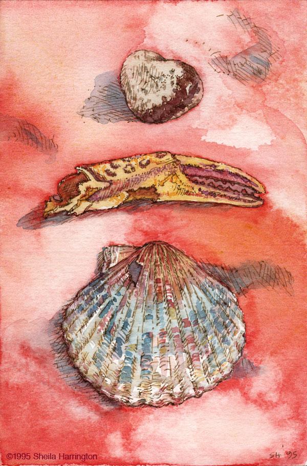 Shells-Stone