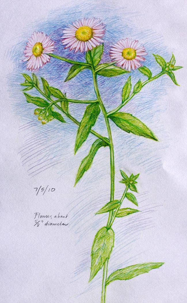 PinkWildflower