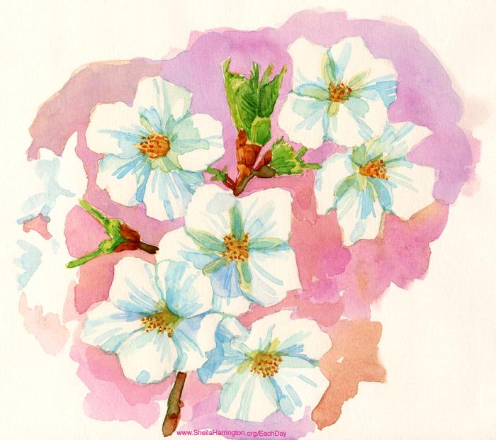 CherryBlossomsSketch