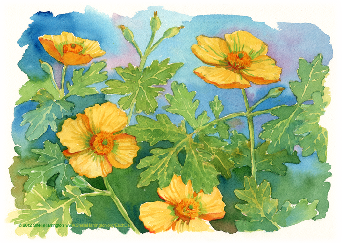 WoodPoppies